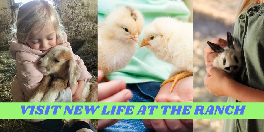 See new life at Rounds Ranch