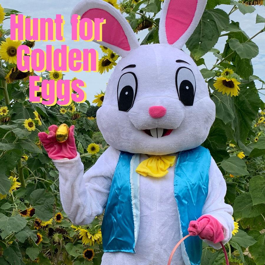 Hunt for Golden Eggs