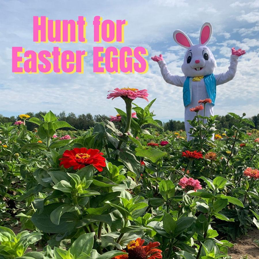 Hunt for Easter Eggs